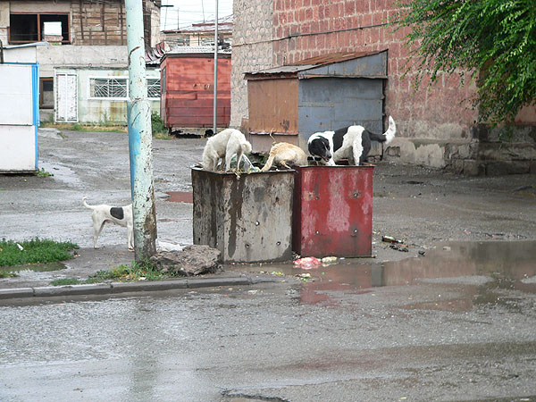Trash Problem in Armenia