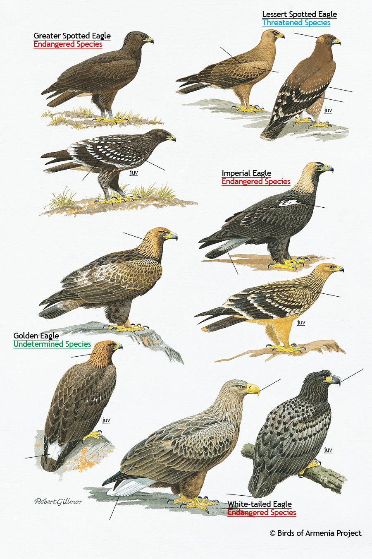 uwo essay bird courses