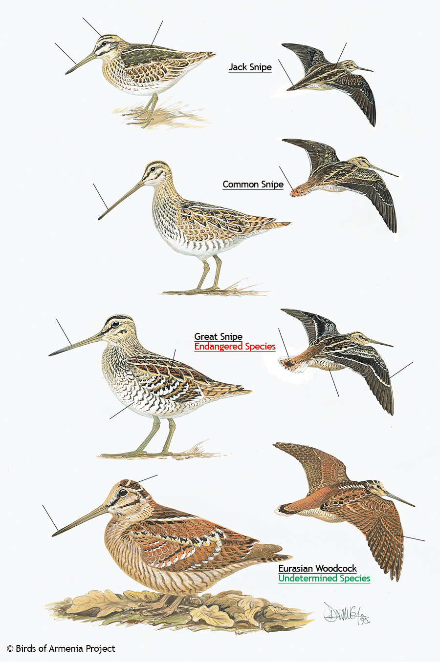 2014 | Birding Frontiers | Page 35