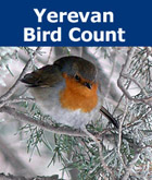 Donation - Yerevan Bird Count