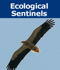 Donation - Ecological Sentinels